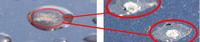 img_kousa02.jpgのサムネイル画像